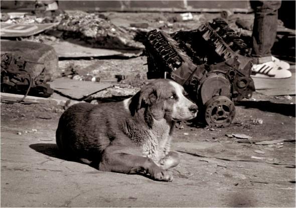 Harlem-BLIND-Dog-1988 copy