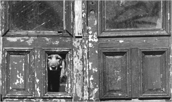 harlem lookout