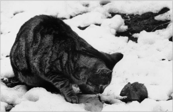 cat vs. rat