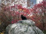 Black Cat Central Park 2016