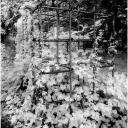 Monkey Bars 1996 (Infra-Red)